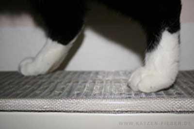 Katz läuft über gesichterten Heizkörper