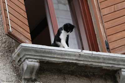 Katze sitzt an offenem Fenster