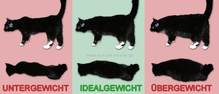 Gewichtscheck bei Katzen