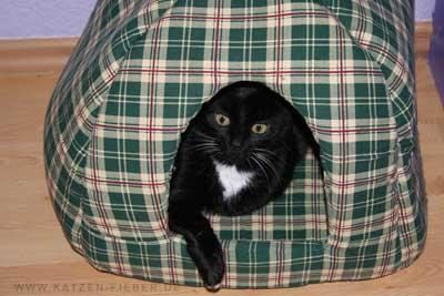 Katze Lucy in ihrer Katzenhöhle