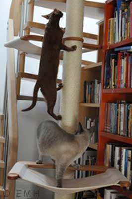 Katze läuft an Kratzbaum hoch
