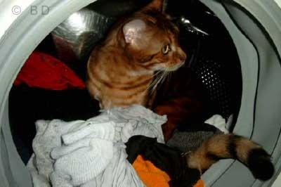 Katze sitzt in Waschmaschine