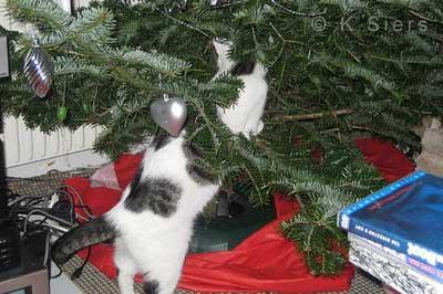 Katze erkundet einen Weihnachtsbaum