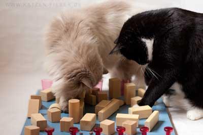 Katzen am Fummelbrett