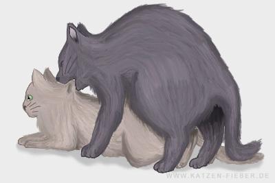 Kater und Katze beim Deckakt