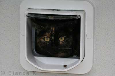 Katze schaut aus Katzenklappe