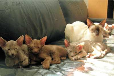 Katzenkitten mit Mutterkatze