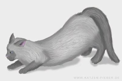 rollige Katze