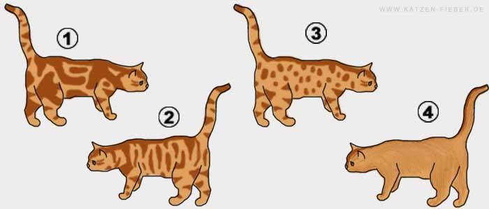 Tabbyzeichnung bei Katzen, classic tabby, mackerel tabby, spotted tabby, ticked tabby