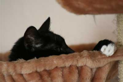 Katze in Liegemulde