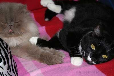 Muffin und Kasi beim Kuscheln auf dem Sofa