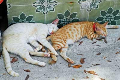 dösende Katzen
