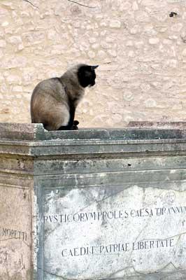 Katze sitzt auf Denkmal/Grabstein