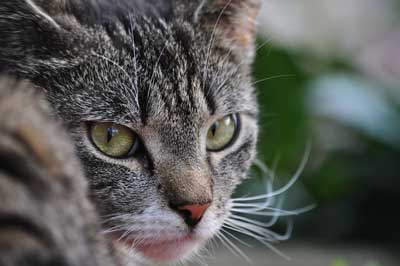 Katze blickt sich um