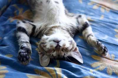 Katze faulenzt in lustiger Schlafposition