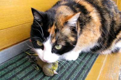 Katze Frisst Schnittlauch