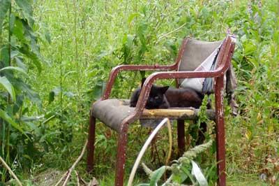 Katze im Gartenstuhl