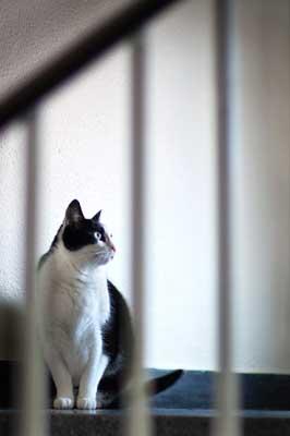Katze im Treppenhaus