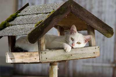 gesicherter freilauf f r katzen garten einz unen katzengehege. Black Bedroom Furniture Sets. Home Design Ideas