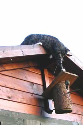 Katze klettert auf Vogelhaus