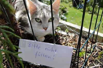 """Katze mit """"bitte nicht füttern"""" Schild"""