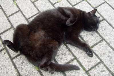 Katze räckelt sich genüsslich