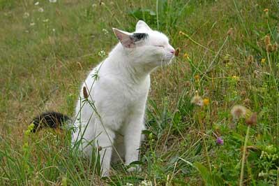 Katze schnuppert an Pflanze