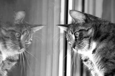 Katze spiegelt sich im Fenster