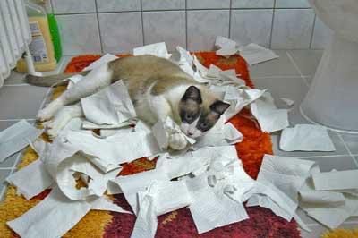 Katze zerfetzt Toilettenpapier
