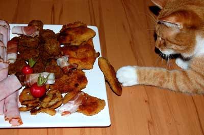 Katze klaut Essen
