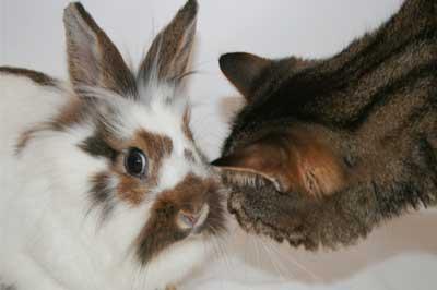 Katze und Kaninchen