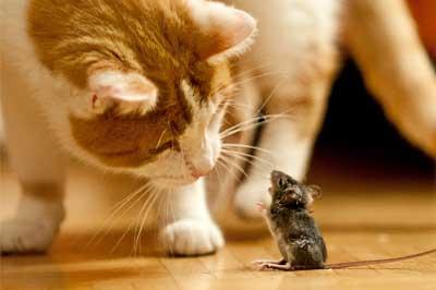 Katze begrüßt Maus