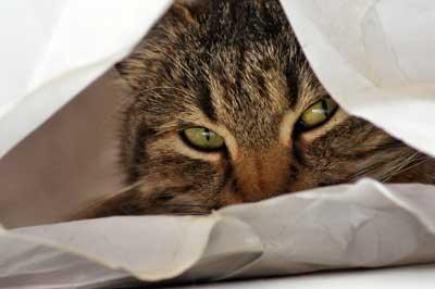 Katze versteckt sich in einer Tüte