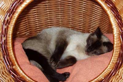 Katze schläft im Weidenkörbchen