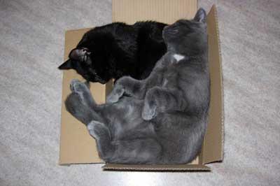 Katzen schlafen zusammen in Karton