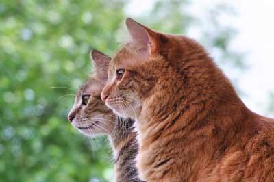 Katzen sitzen nebeneinander