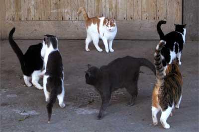 eine Gruppe von Katzen