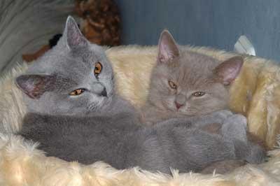 kuschelnde Kitten