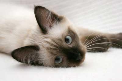Kitten liegt auf der Seite