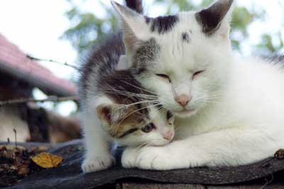 Kitten und Mutterkatze