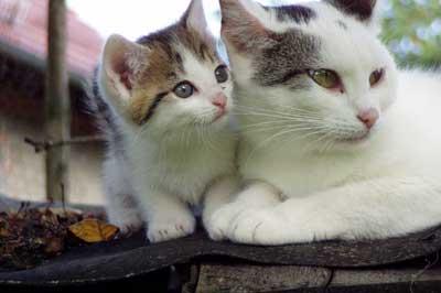 Mutterkatze mit Kitten