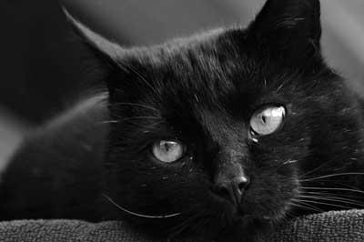 Schwarz/weiss-Bild einer Katze