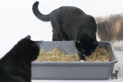 Beschäftigung Von Und Mit Katzen Katzenspielzeug Selbstgemacht