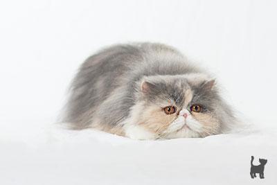 Katze Janis lauert