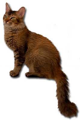 Du oder deine Haustiere als WaCa Katze! (Hilft bei langeweile!) Laperm